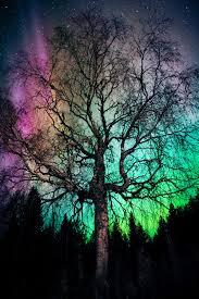 aurora treealis damn nice northern lights so i decided to view