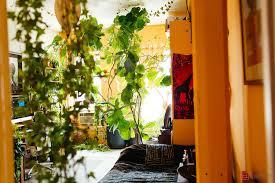 Plants Indoors by My 1200sqft Inside Summer Rayne Oakes U0027 Williamsburg Oasis Filled