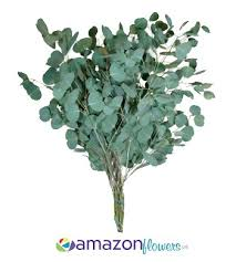 Bulk Wedding Flowers Bulk Silver Dollar Eucalyptus Flower Wholesale Wedding Flowers