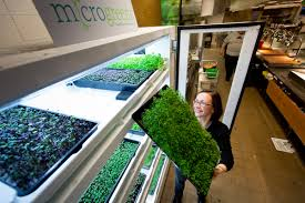 how does your garden grow microsoft finds success sustainability