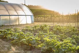 thanksgiving point farm hours singlethread farms