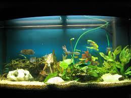 Home Aquarium News Home Aquariums On Best Home Aquarium Interior Designs World