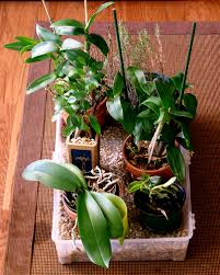 orchids care houseplant care guides orchid care 101