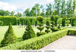 topiary stock images royalty free images vectors