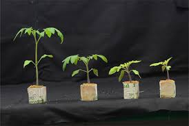 Fluorescent Light For Plants The Effect Of Solar Light And Fluorescent Light On Plant