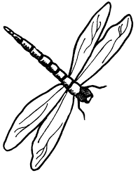 printable dragonfly stencils dragonfly outline clipart best nursery room pinterest