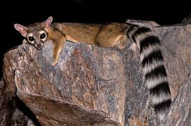 Arizona wild animals images Sedona and verde valley nature and wildlife birds and animals jpg