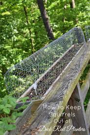how to keep squirrels out of deck rail planters