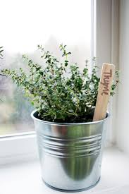 Herbs Indoors Tips For Keeping Herbs Alive Indoors Aol Lifestyle Food