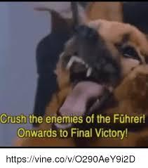 boxer dog vine 25 best memes about onward onward memes