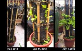 build a diy vertical planter for small space gardening treehugger