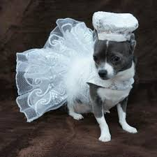dog wedding dress 11 photos of dogs wearing wedding dresses will be the best thing
