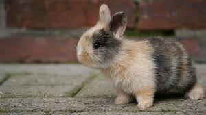rabbit bunny baby bunny