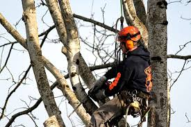 isa certified arborists cascade tree works vancouver wa