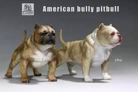 american pitbull terrier z hter deutschland sale mr z 1 6 american bully pitbull dogs scene accessories