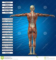 3d Human Anatomy 3d Human Male Anatomy With Muscles And Text Stock Photo Image