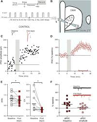 postsynaptic depolarization enhances gaba drive to dorsomedial