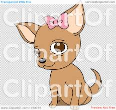 halloween bow with transparent background clipart female chihuahua with a bow royalty free vector