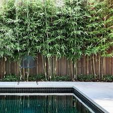 Landscaping Around Pool Best 25 Pool Landscaping Ideas On Pinterest Backyard Pool