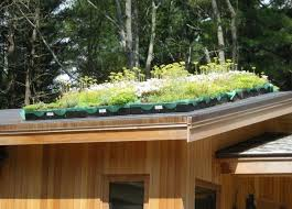 Roof Gardens Ideas Small Roof Garden Ideas Small Roof Top Gardens Modification