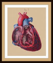 Anatomy Of Human Heart Pdf Antique Anatomical Heart Cut Away Cross Stitch Pattern Pdf