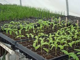 urban foodfare not warfare food plants 4 urban core life