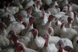dozens of countries are banning us poultry because of a bird