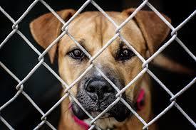 scottsdale az media ohana animal shelter photography video