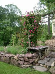 zephirine drouhin climbing roses susanguagliumi