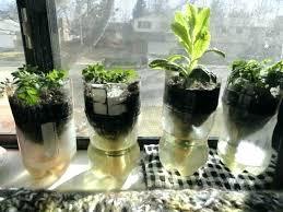 window herb harden windowsill herb garden 4 fiesta window sill small herb garden clay