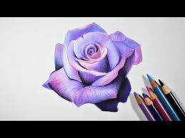how to draw a lavender rose step by step tutorial