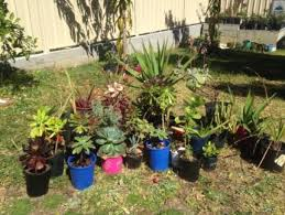 blue mountains nsw wholesale indoor plant nursery closing down