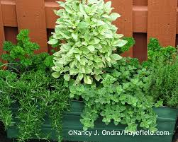 Window Box For Herbs Celebrating Containers Hayefield