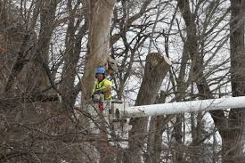 does the city remove dead trees from the right of way herald whig