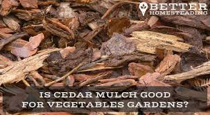 vegetable growing archives better homesteading