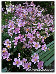 perennial gardening fabulous fall garden flowers an