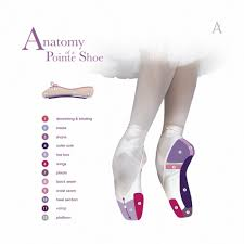 Sole Of The Foot Anatomy Anatomy Of A Pointe Shoe U2013 Russian Pointe