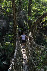 a guide to the amazing living root bridges of meghalaya the