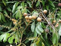 fruit bouquet san diego fruit trees san diego guide best trees to grow install