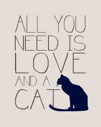 best 25 cat quotes ideas on pinterest cat love cat things and
