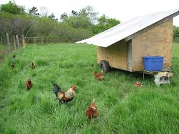 Backyard Chicken Tractor by Building A Mobile Chicken Coop For Pastured Hens The L A N D