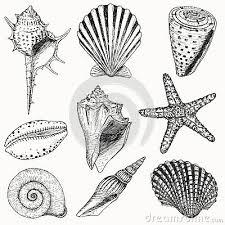 25 trending seashell tattoos ideas on pinterest sand dollar