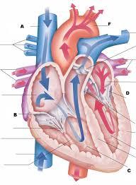 Anatomy And Physiology Ear Anatomy And Physiology Ii Test Iii Proprofs Quiz