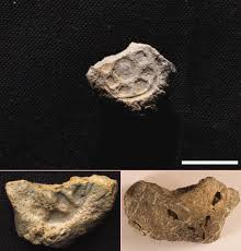 new finds suggest biblical kings david and solomon actually
