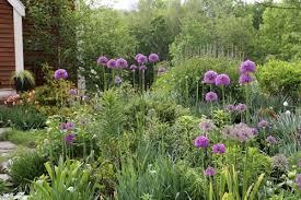 marvellous ideas bulb garden astonishing decoration mbg plant