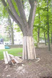 tree care rooting out trouble winnipeg free press homes