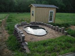 Backyard Duck Ponds Duck Pond Pool Suggestions Backyard Chickens