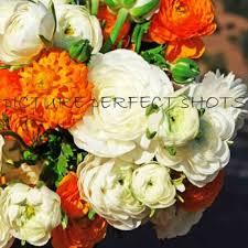 Wholesale Flowers Far East Wholesale Flowers 13 Photos U0026 23 Reviews Florists