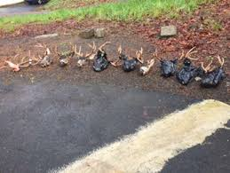 Washington wildlife images Wildlife officer gang of washington poachers 39 are just killers jpg