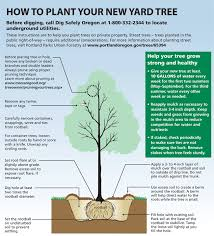 treebate program details treebate program plant a tree get a